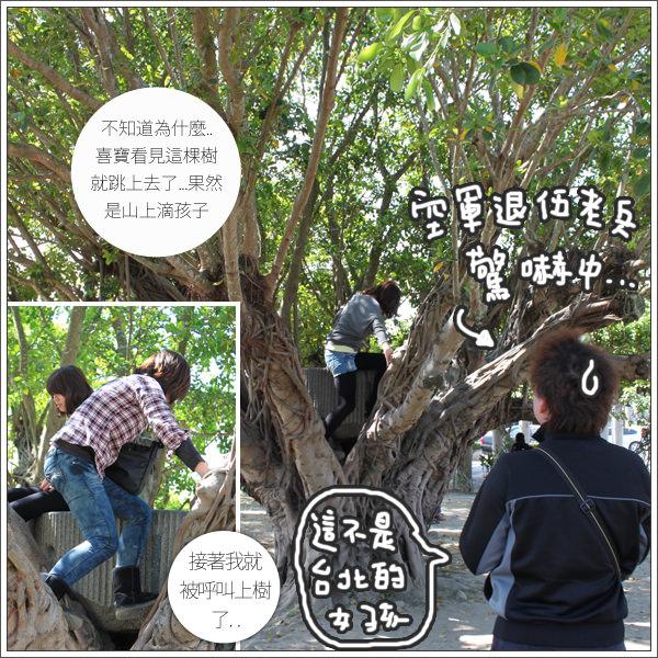 旁邊的老榕樹